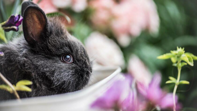 konijn dat eet